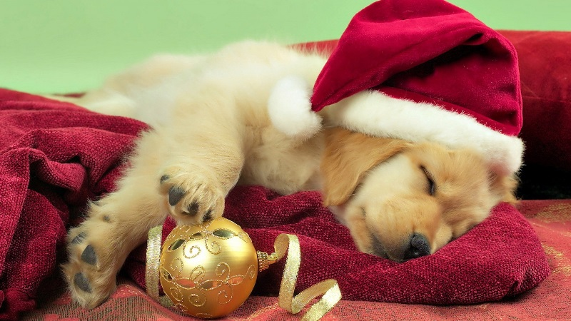 Puppy-Christmas-Gift-1920x1080