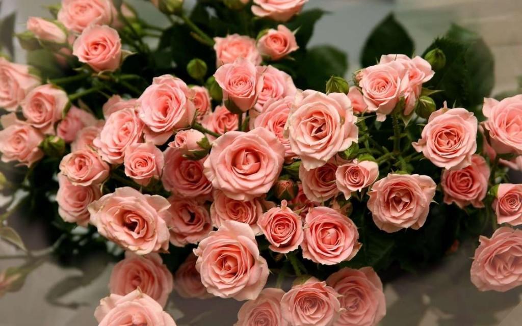 bukety-cvety-rasteniya-rozy-39746