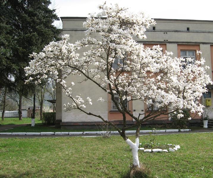 Перечин буяє весняним цвітом – білим, жовтим, рожевим. ФОТО