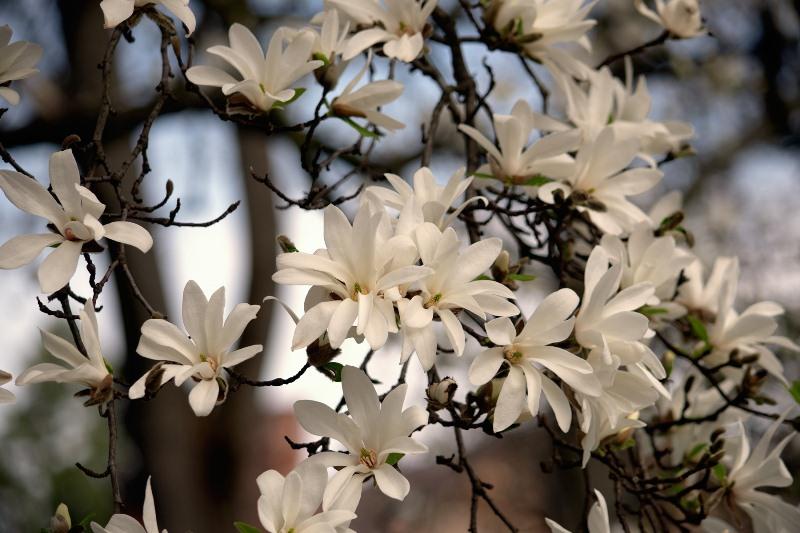Ужгород квітує. ФОТО