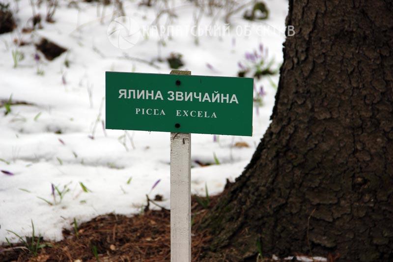 Дендропарк «Березинка» – екзотичний оазис на Закарпатті. ФОТО
