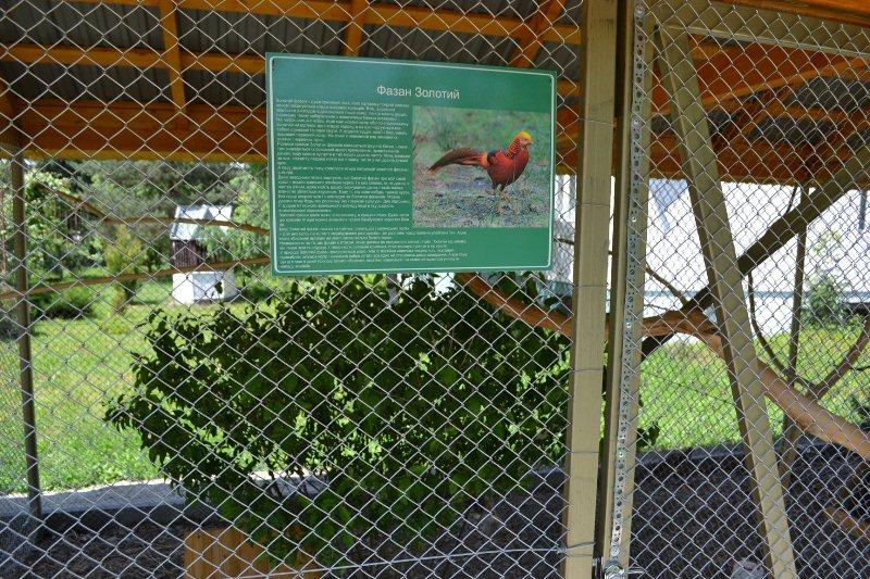 Закарпатські лісівники створили перший в області фазанарій