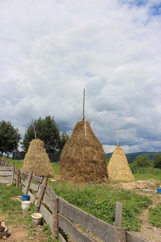 На закарпатській фермі вирощують продукти, як колись. ФОТО