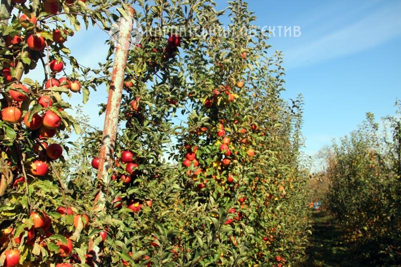 Сад, вирощений з любов'ю: сім'я із Ужгородщини ділиться секретами