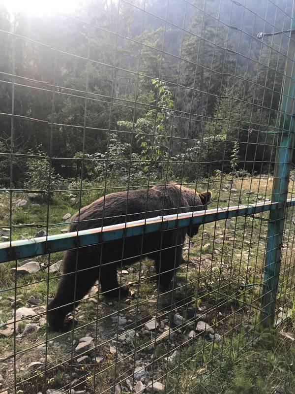 Природний парк «Синевир»: в гості до бурого ведмедя… Фото, Відео
